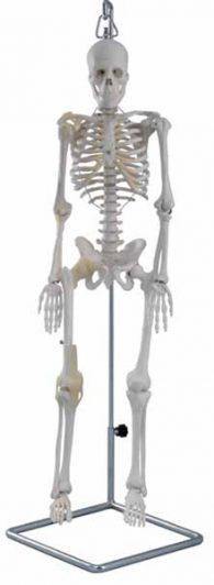 Mini scheletro con giunture